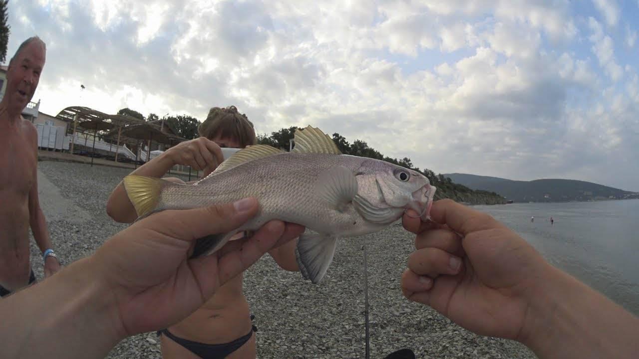 Спиннинги для морской рыбалки: как выбрать, обзор лучших удилищ, ловля с берега