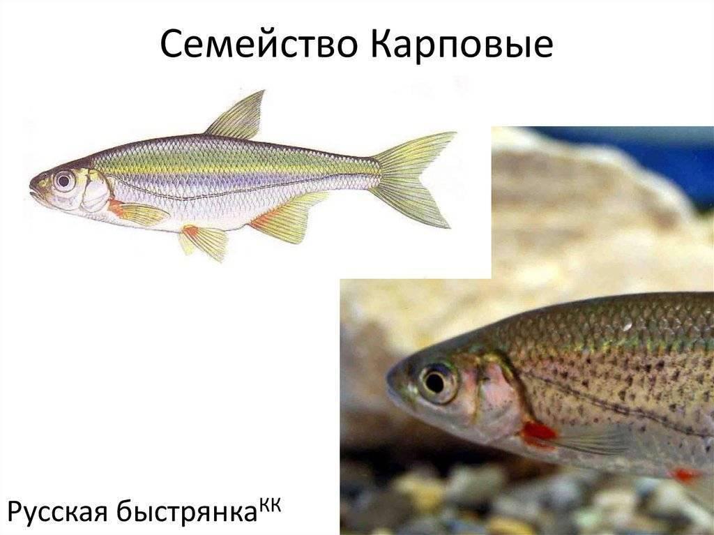 Подробное описание всех рыб в россии с фотографиями
