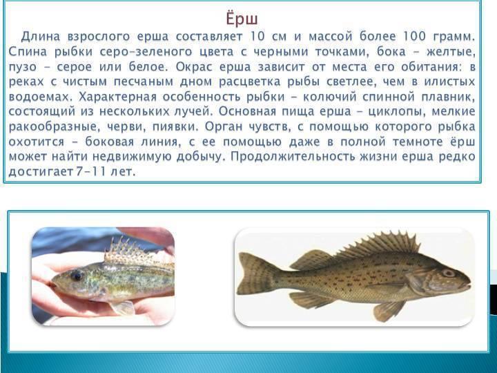Топ-10 болезней аквариумных рыбок: симптомы и лечение - лечение