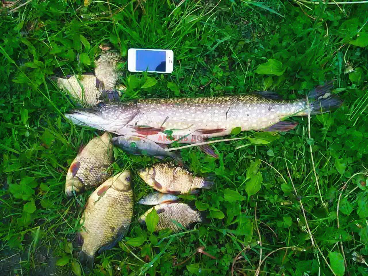 Рыбалка во владимирской области и во владимире