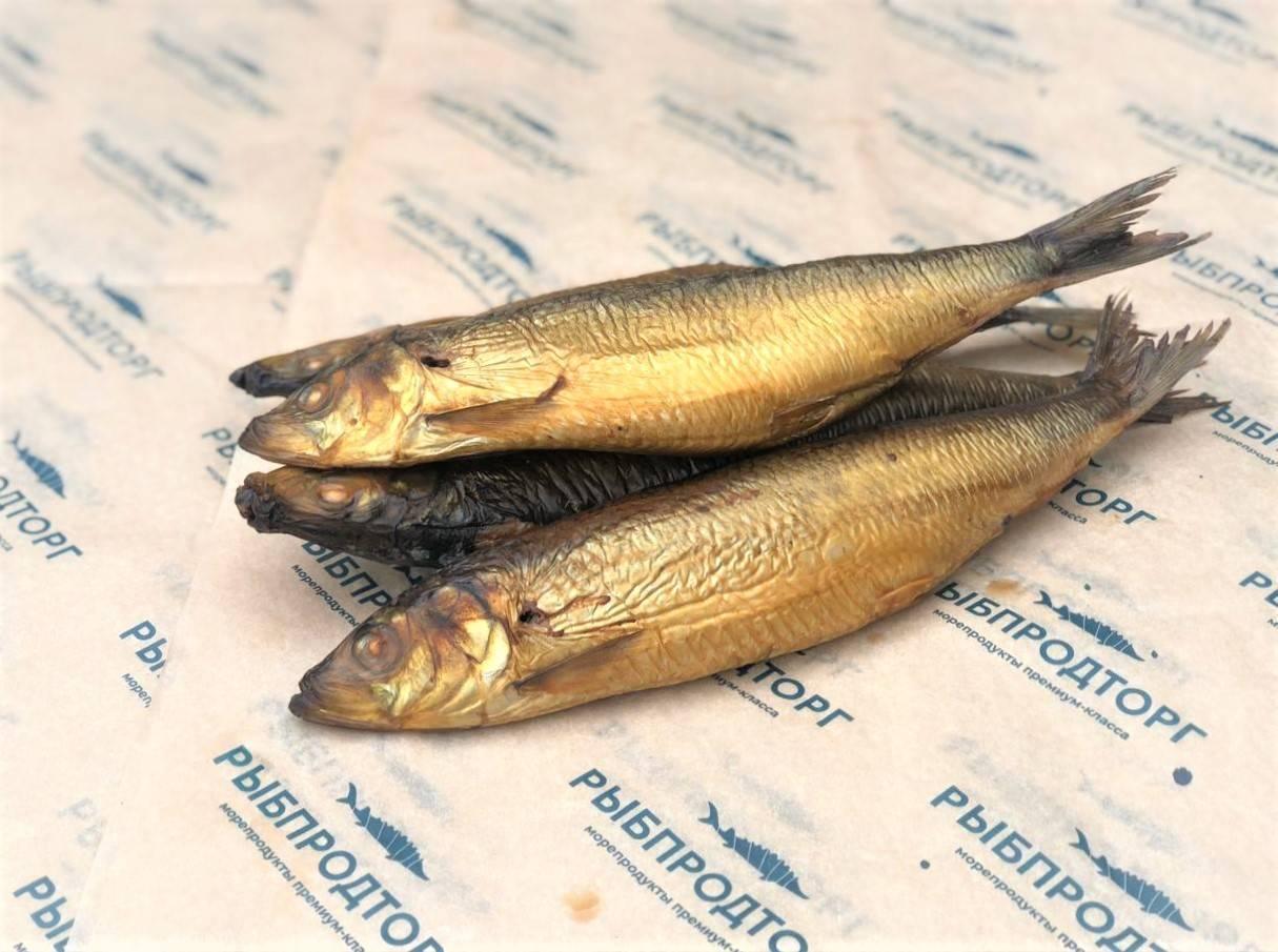 Рыба салака: описание вида, польза, как выбрать и приготовить
