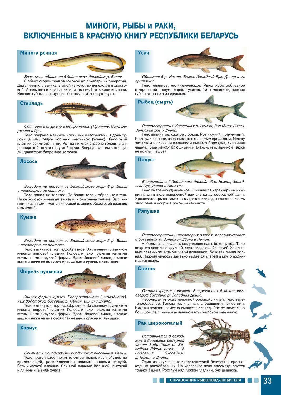 Болезни аквариумных рыб — разновидности и лечение