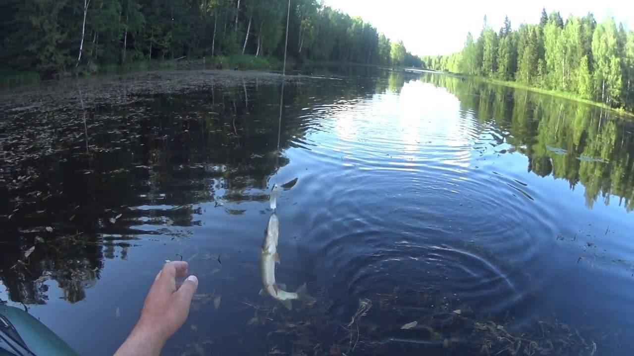 Ловля щуки осенью на реке