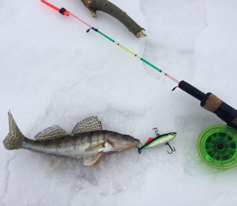 Ловля судака и щуки на раттлины зимой: место ловли, выбор приманки, снасти и техника рыбалки