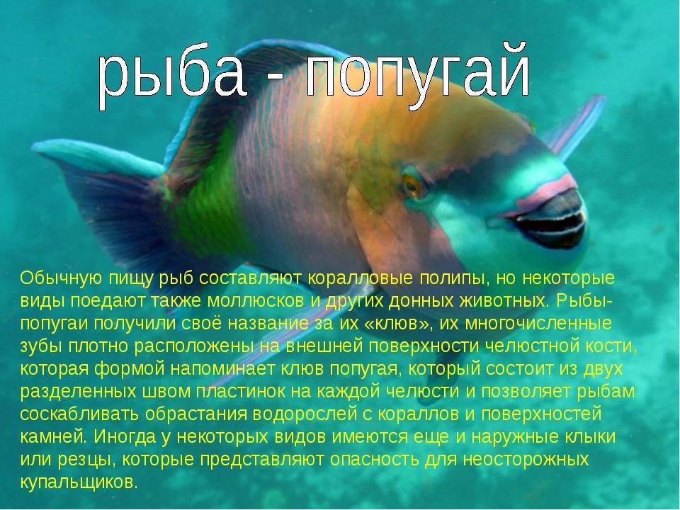 Как спят рыбы