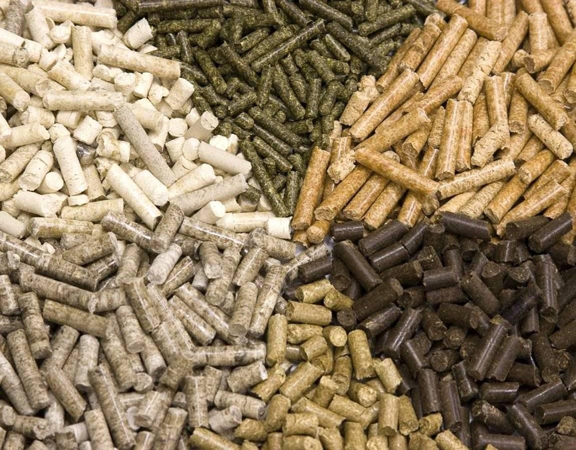 Чем кормить форель в домашних условиях. эффективные способы разведения форели. разведение форели в узв