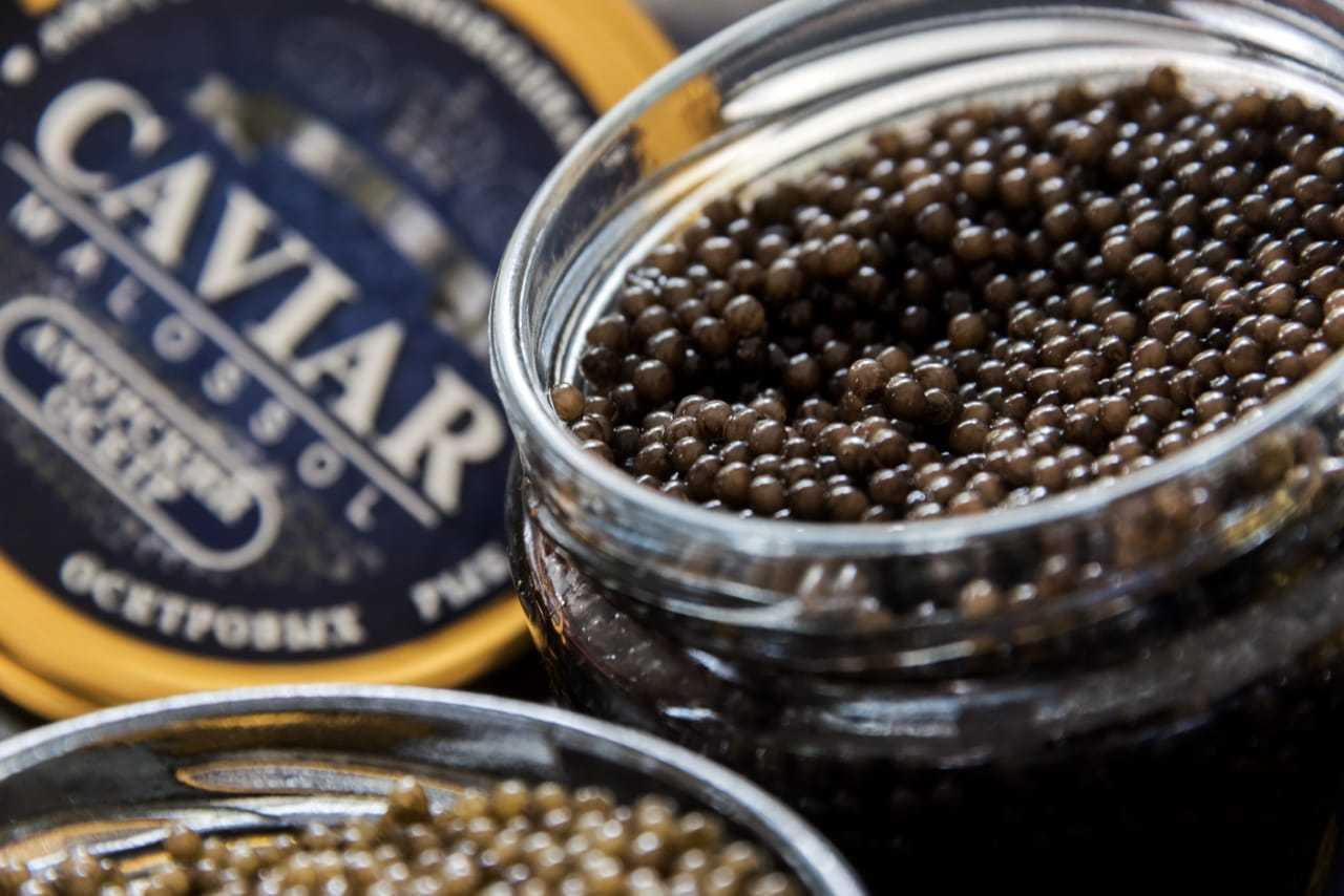 Черная икра – польза и вред изысканного деликатеса