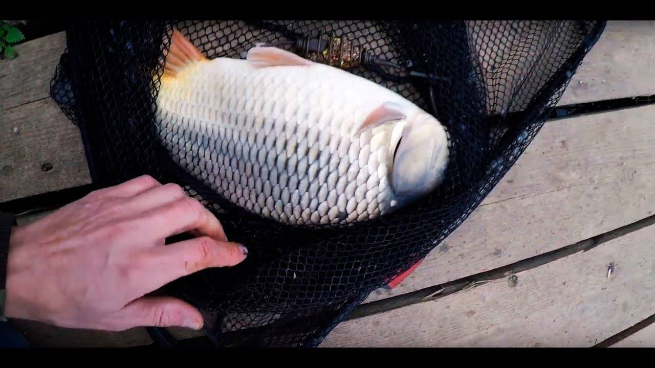 Рыбалка в чехове московской области