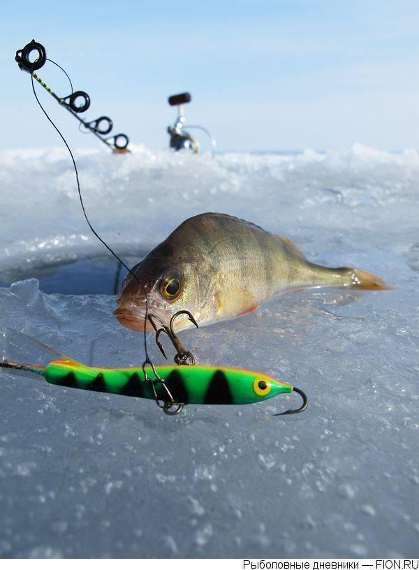 Ловля на балансир зимой – нюансы и особенности рыбалки [2019]