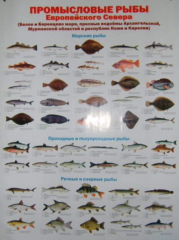Самый большой рак в природе и аквариуме - 24сми