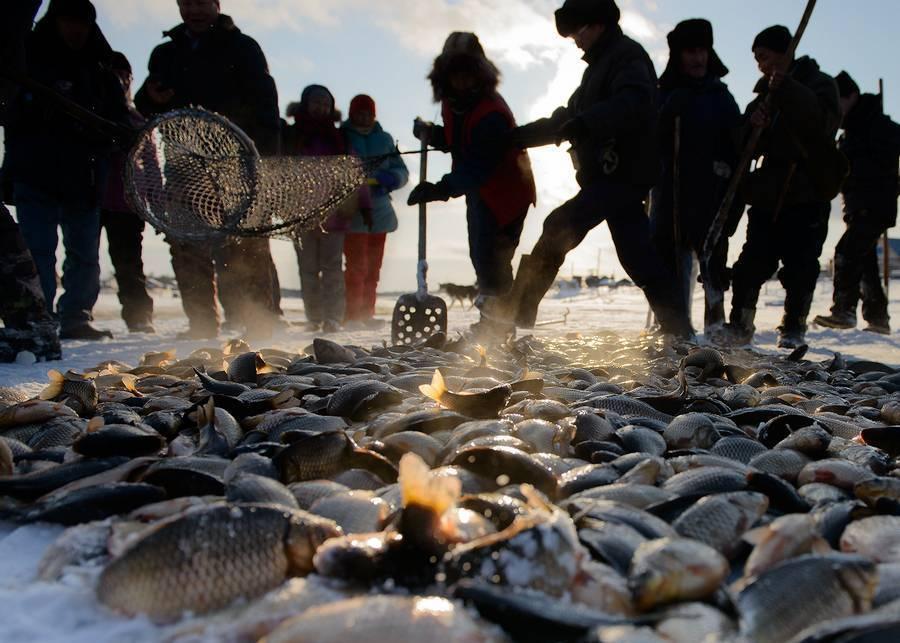 Рыбалка в якутии. республика саха. отчеты и форум