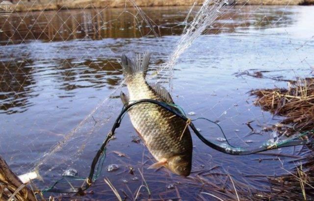 Ловля на дорожку: что это такое и для какой рыбы подойдёт