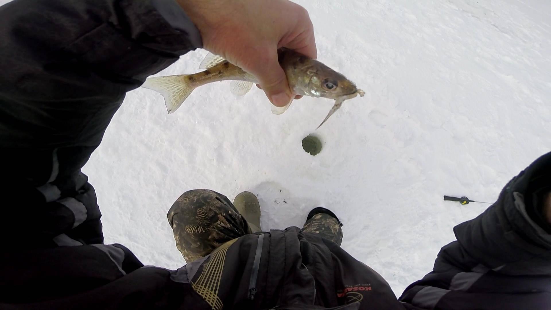 Ловля берша зимой натюльку