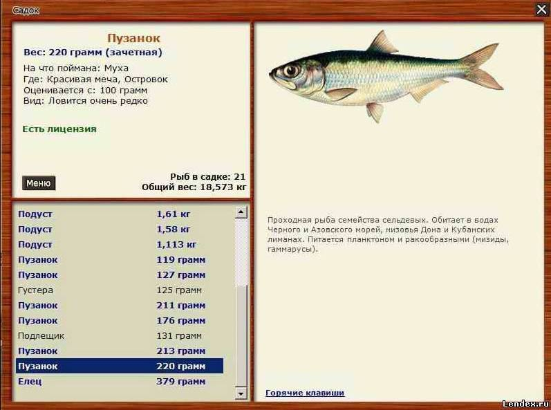Пузанок — что это за рыба и как ее ловить