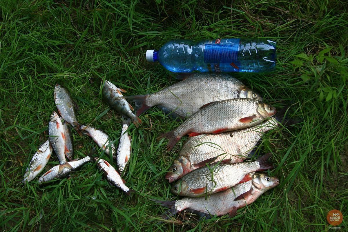 Рыбалка в тюмени в контакте открытая