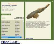 Обыкновенный подкаменщик: описание рыбы и ее повадок