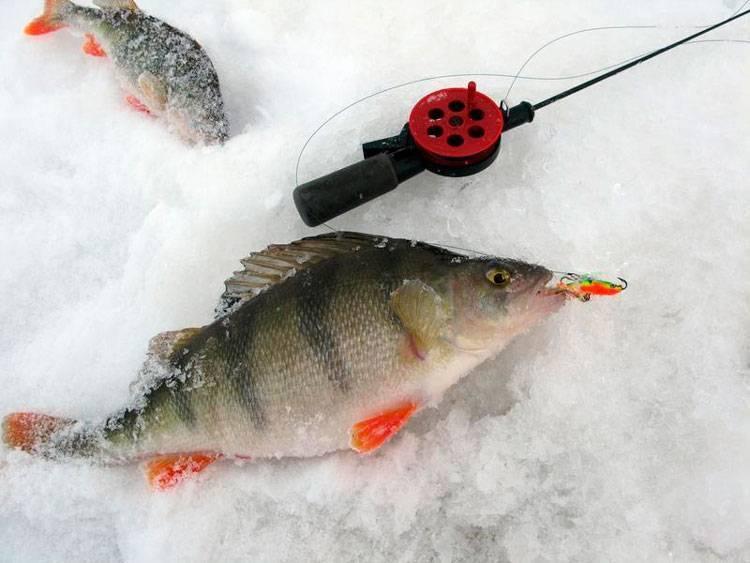 Ловля судака на балансир зимой,судак зимой на балансир