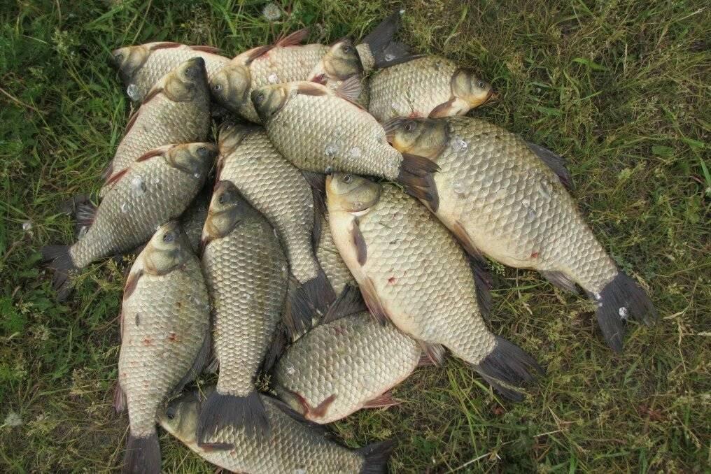 Рыбалка в раково – достоинства и недостатки