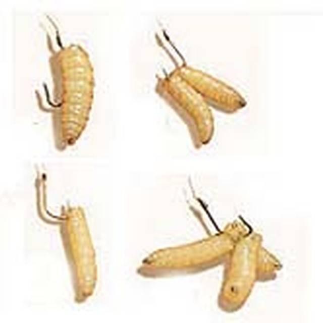 Как насаживать мотыля на мормышку зимой: секреты профессионалов