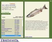 Белорыбица что за рыба