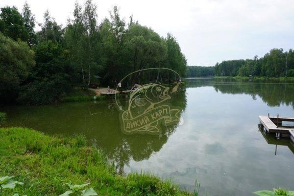 """Рыбалка на рыболовной базе """"сосенки"""" в подмосковье - видео с ловлей карпа"""