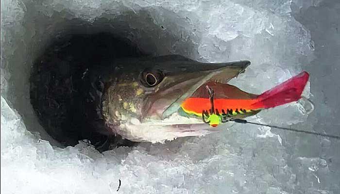 Зимняя рыбалка на балансир – как правильно подобрать наживку