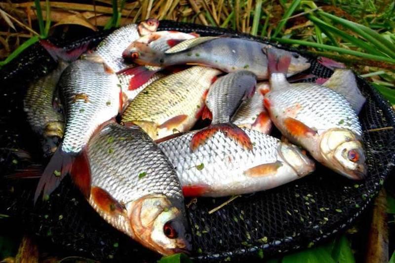 15 лучших рыболовных мест смоленской области. бесплатные и платные | животный мир