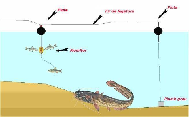 Как ловить сома летом с берега?