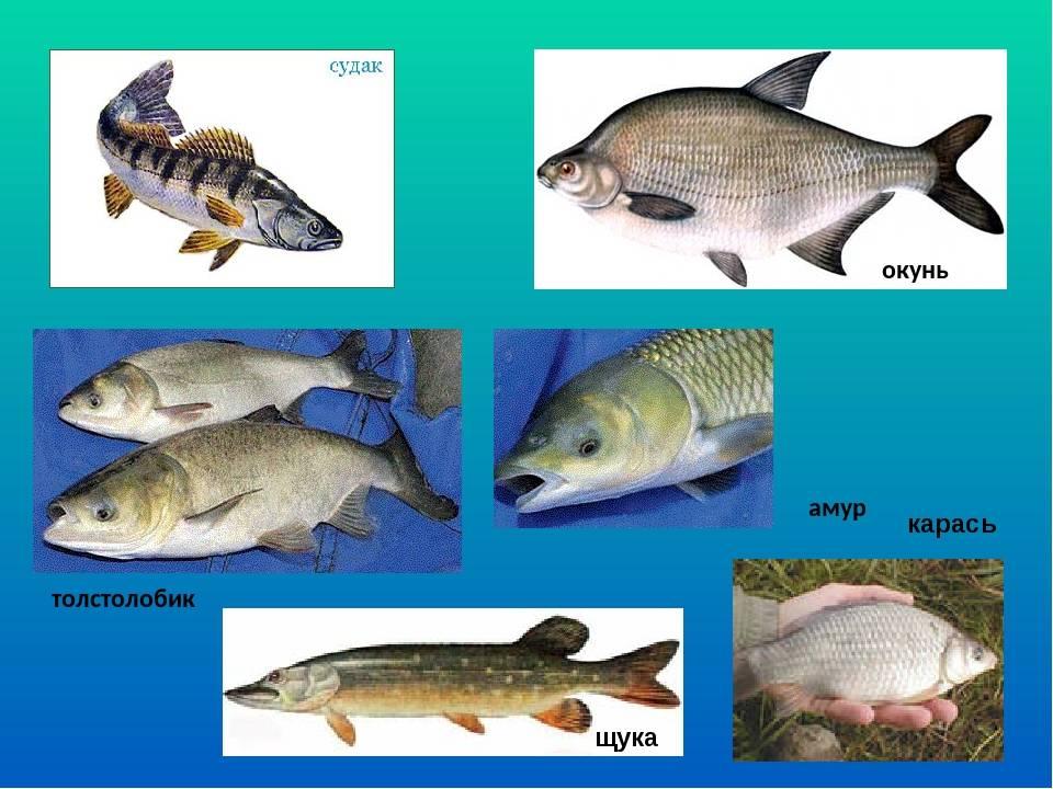 Рыбы-соседи - соседство разных рыб друг с другом – рыбалка  - информационно развлекательный портал