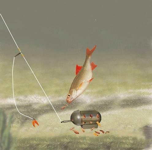 Ловля густеры: способы ловли густеры на поплавочную удочку с лодки весной и летом