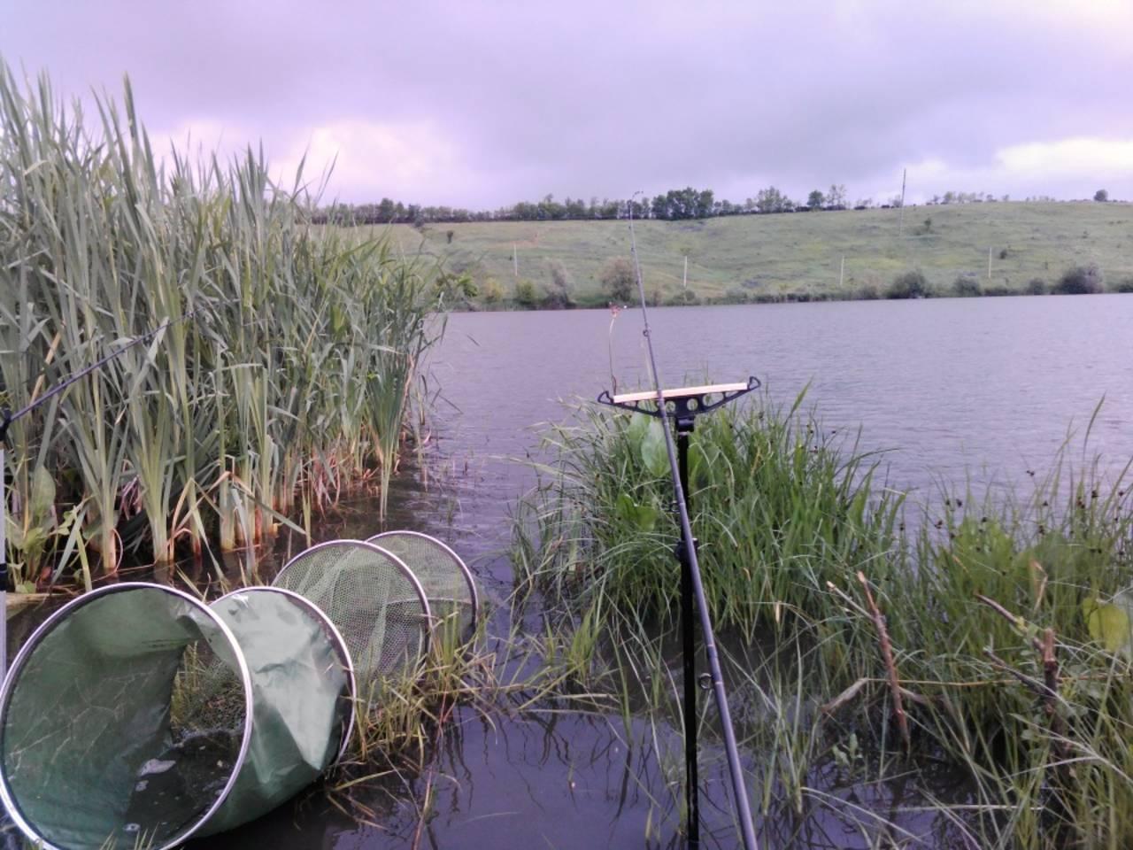 Платная рыбалка в подмосковье: лучшие озера, нормы вылова