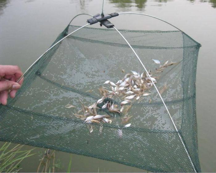 Как ловить креветку: способы ловли, выбор приманки, штраф
