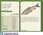 Нельма: описание, места обитания, образ жизни, нерест, способы ловли и гастрономическая ценность