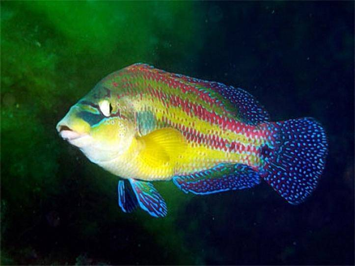 Сырть: как выглядит рыба, места обитания, особенности ловли