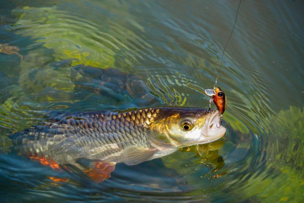 Рыбалка в раково - платная и бесплатная, цена