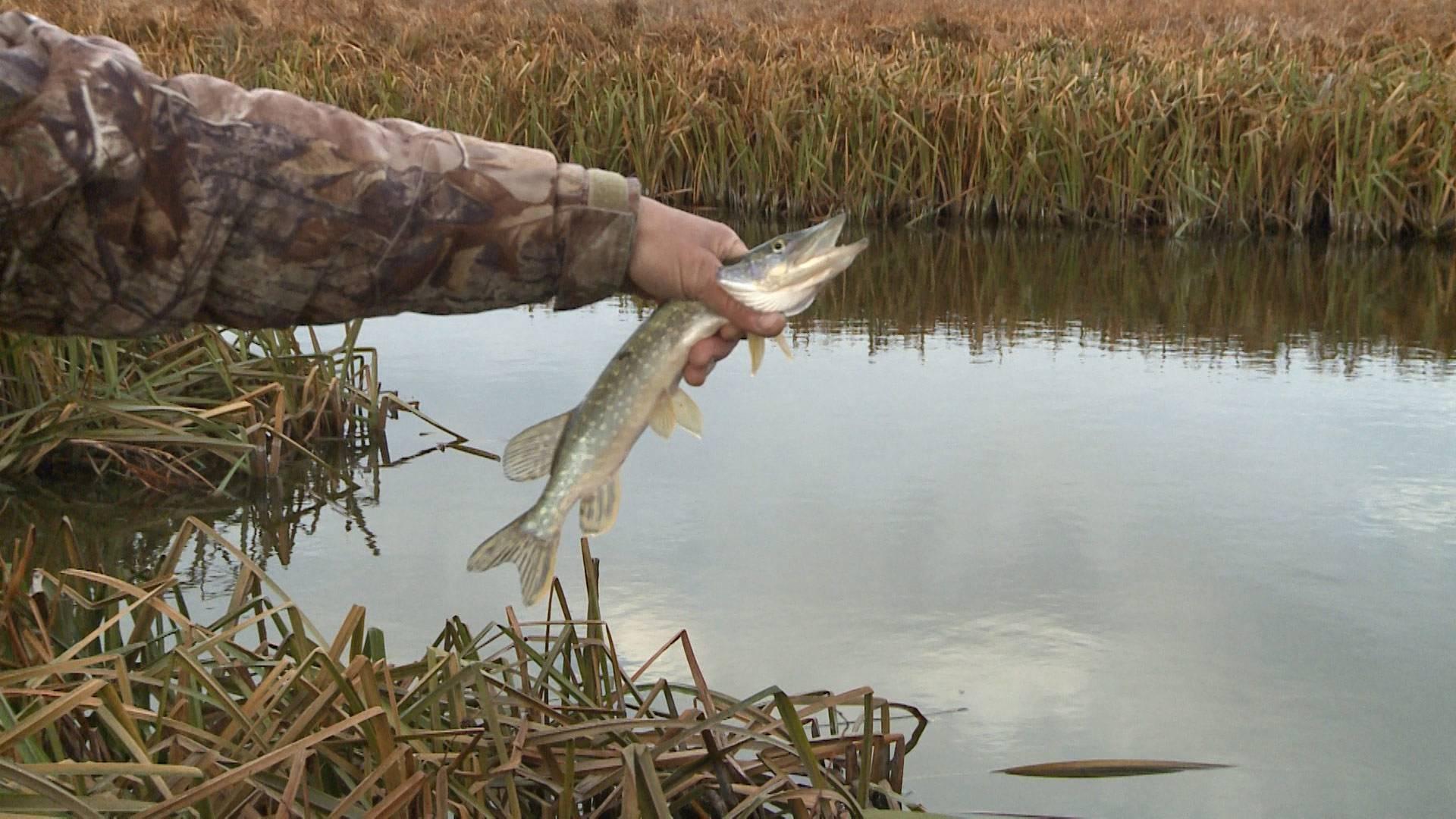 Важно!!! новые правила рыболовства на ставрополье!