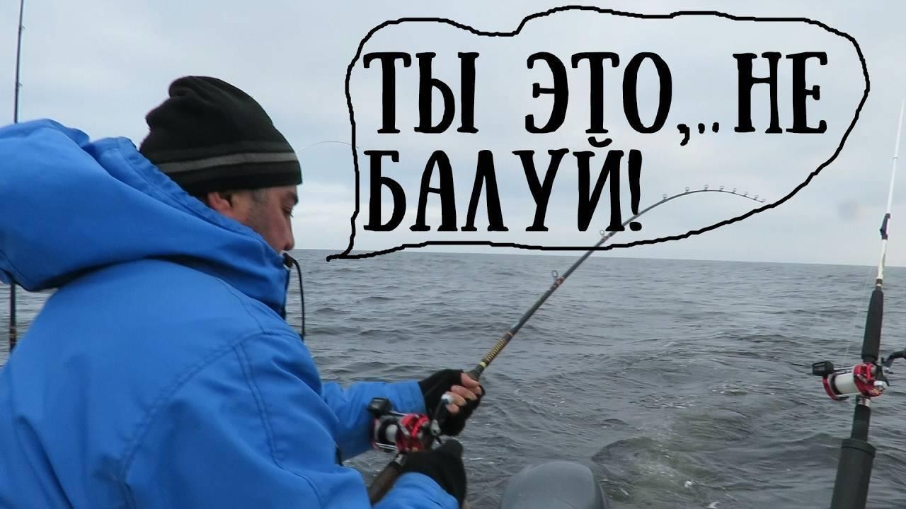 Щука на троллинг: техника ловли, снасти и приманки для троллинга