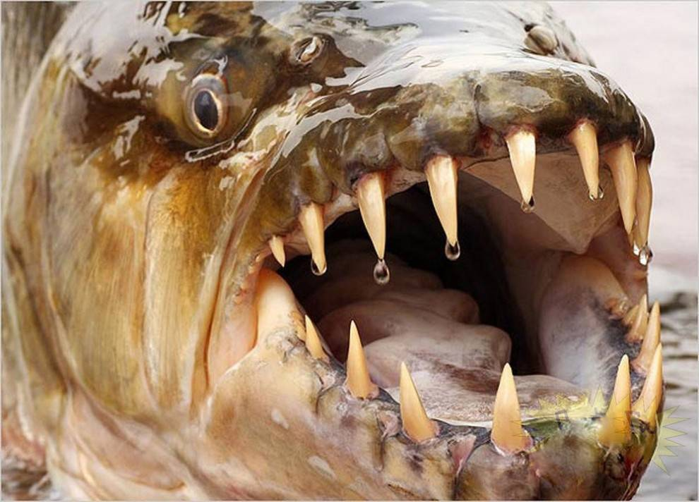 Самые опасные рыбы в мире – список, чем опасны, названия, где водятся, фото и видео