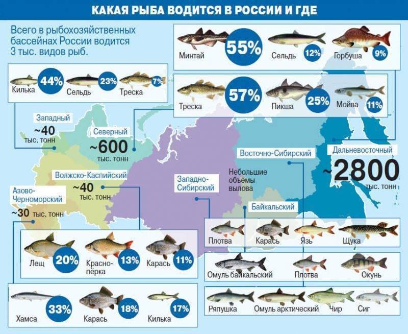 Рыбалка в подмосковье: бесплатные водоемы, карты, где клюёт