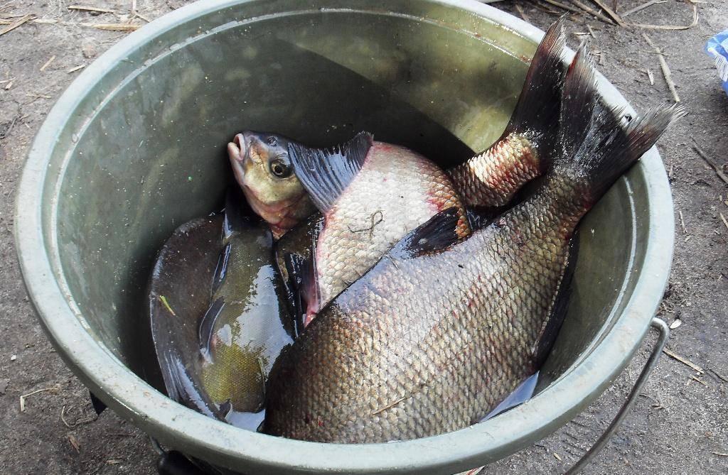 Ловля леща зимой ночью и подготовка к рыбалке ловля леща зимой ночью и подготовка к рыбалке
