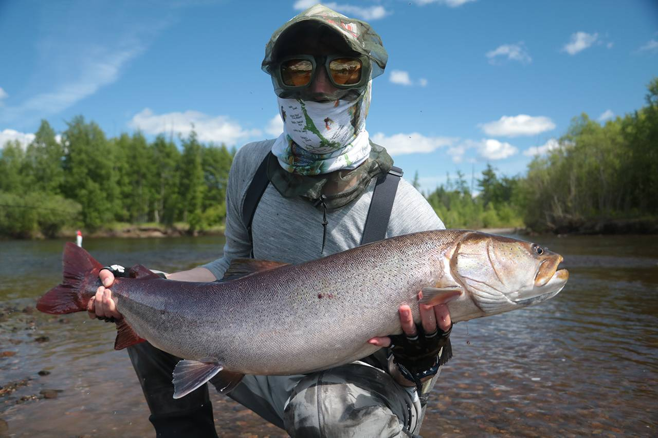 Большие таймени их среда обитания и внешний вид, образ жизни, фото самых больших рыб