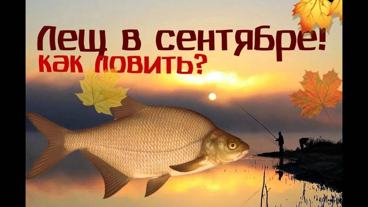 Ловля нафидер осенью