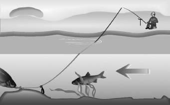 Ловля голавля на спиннинг: снасти, наживка и техника