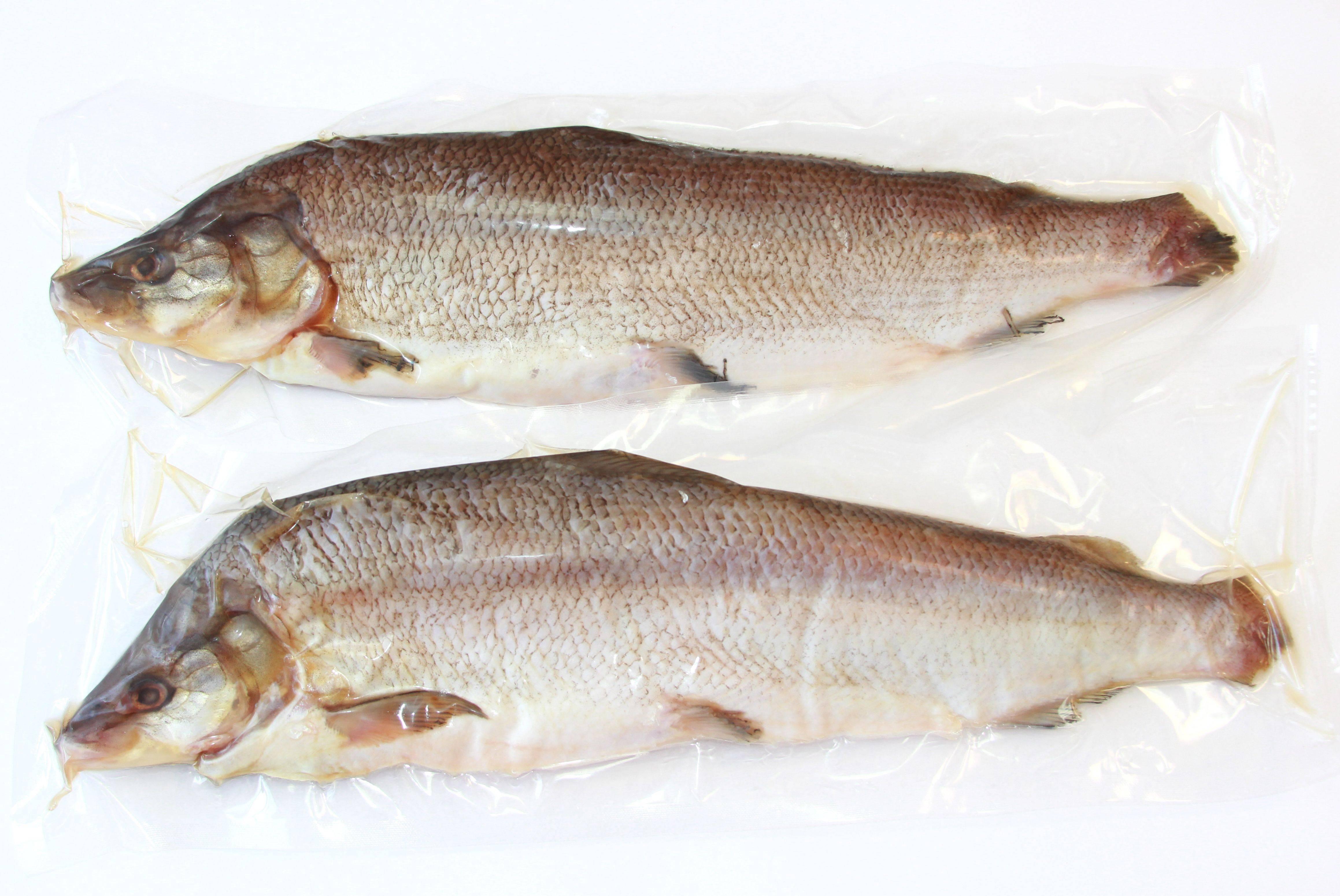 Нельма, или белорыбица (лат. stenodus leucichthys nelma) – рыба из рода сиговых, семейства лососевых » конкретно.ru - новостной портал.