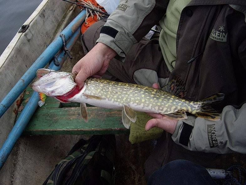 Оцениваем рыбалку на вуоксе