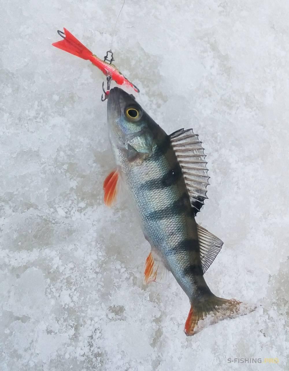 Ловля щуки на балансир зимой: где ловить, как выбрать балансир - читайте на сatcher.fish