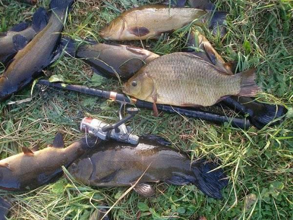 Рыбалка в ярославской области и в ярославле