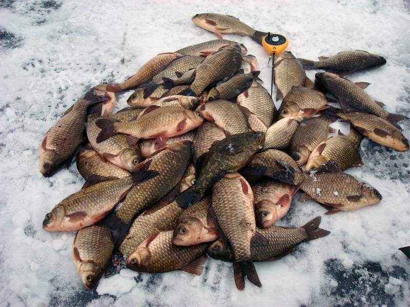Зимняя рыбалка – ловля рыбы зимой. секреты и полезные советы