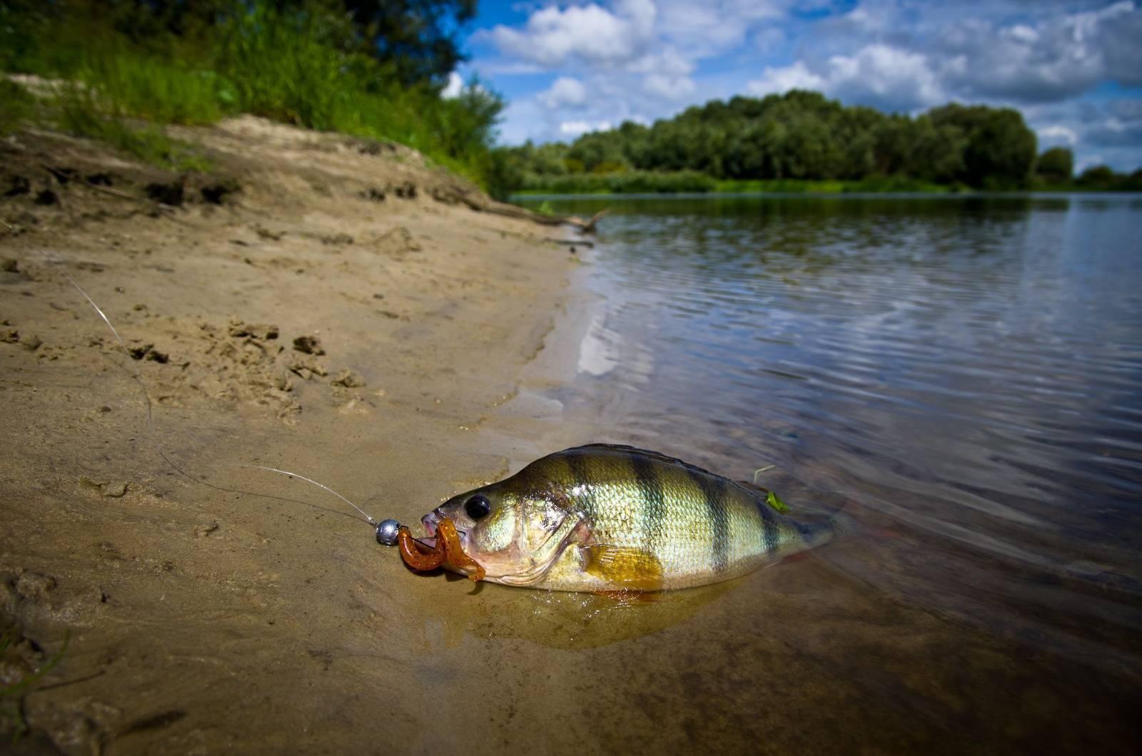 Рыбалка в раково московской области: отчет, отзывы :: syl.ru