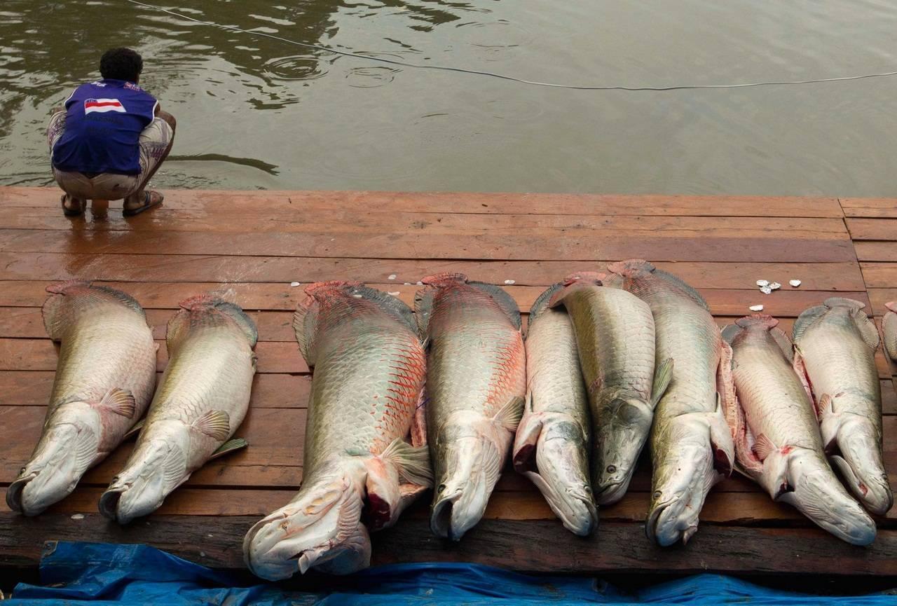 69 фраз и высказываний про рыбалку: короткие цитаты, афоризмы, изречения о рыбалке и ее особенностях
